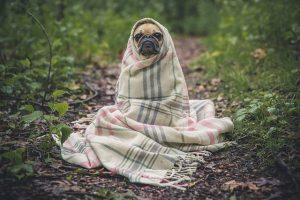 באיזה גיל מחסנים גורי כלבים